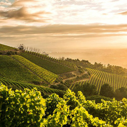 Beautiful Wine Route
